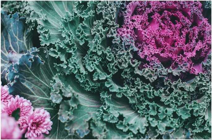 salad - cabbage